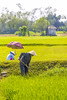 Hue_0573 (JCS75) Tags: asia asie vietnam hue canon