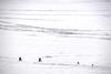 Cycling on Icy lake (MelindaChan ^..^) Tags: siberia russia 俄羅斯 西伯利亞 lake baikal 貝加爾湖 cycling bike chanmelmel mel melinda melindachan bycicle frozen icy snow cold winter 2018 ice people nature life travel pine tree slope alkhon island 奧爾洪島