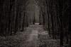 Narrow Escape (Tom Levold (www.levold.de/photosphere)) Tags: cologne forest fuji köln königsforst xt2 xf90mmf2 wald wood tree baum sw bw waldwood