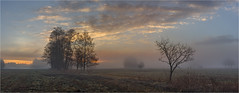 Reischenauer Ansicht (Robbi Metz) Tags: deutschland germany bayern bavaria reischenau augsburgwestlichewälder landscape panorama trees forest sky clouds sunrise fog colors canoneos