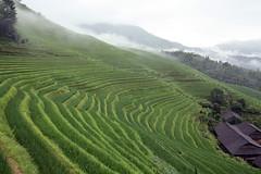 Longji (m-blacks) Tags: china cina travel vacation summer august holiday green nature landscape terraces rice canon guanxi longsheng longji lóngjtītián clouds