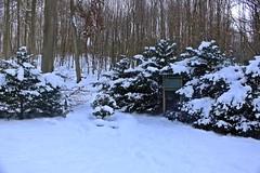 Am Finnischen Krieger (lt_paris) Tags: urlaubinbinz2018 binz rügen granitz winter schnee wald finnischerkrieger bäume