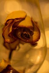 Beauty and the Beast (Gisou68Fr) Tags: macromondays onceuponatime rose verre glass driedrose roseséchée beautyandthebeast labelleetlabête conte fairytale contedefées macro bokeh light lumière bougie candie
