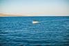 Water Works (Thomas Hawk) Tags: baja bajacalifornia cabo cabosanlucas loscabos mexico boat vacation fav10