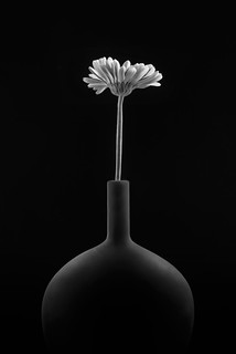 Black Vase With Gerber Daisy