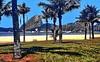 Rio de Janeiro: Pão de açúcar Flamengo Beach (gerard eder) Tags: world travel reise viajes america southamerica südamerika sudamérica sudamerica latinamerica brasil brazil riodejaneiro pãodeaçúcar flamengo flamengobeach beach playa paisajes panorama park parque palmeras palmen palmtree palmtrees landscape landschaft city ciudades cityscape cityview urban urbanlife outdoor