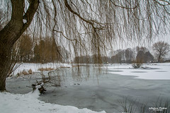 A frozen Lliswerry pond (andyp178) Tags: frozen snow ice tree lake pond spring nikon tamron willow water park freezing