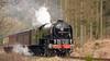 Coasting (_J @BRX) Tags: a1locomotivetrust levisham nymr northyorksmoorsrailway yorkshire england uk britishrail br lner londonnortheasternrailway tornado a1 peppercorn pacific britishrailways applegreen 60163 steam locomotive train nikon d5200