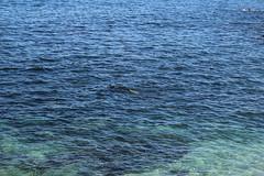 IMG_7644 (mudsharkalex) Tags: california pacificgrove pacificgroveca