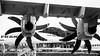 40 years (Yannick Viviant) Tags: concorde avion aéronautique blagnac