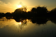 The sun goes down. (Eddie Crutchley) Tags: europe england cheshire outdoor nature beauty lake simplysuperb silhouettes sunset reflections trees greatphotographers