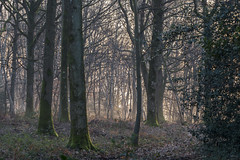 Forest dream (Richard Holding) Tags: aube eure forest forêt m43 normandie normandy olympus omd soleil sunstar sunrise