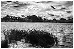 Hinchingbrooke Park (fenman_1950) Tags: lake countrypark hinchingbrooke park huntingdon water