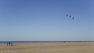 Marée basse sur la côte Normande 02