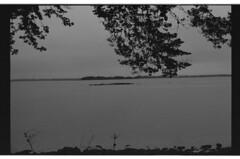 P55-2017-021 (lianefinch) Tags: blackandwhite blackwhite noirblanc noiretblanc argentique argentic analogique monochrome bretagne morbihan paysage landscape mer sea golfe nature ocean arbre tree eau water