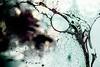 Better Photography Through Chemistry - 34 (Katherine Ridgley) Tags: toronto abstract liquidart liquid liquidsculpture chemical chemistry macro detail space trippy surreal swirl blue red green web