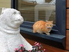 Can and bear (markb120) Tags: animal fauna cat tabby puss statue sculpture red ginger rufous carroty foxy redhaired