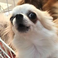 หมา สุนัข (Prachatai) Tags: หมา สุนัข