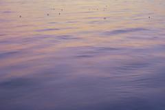 夕陽 / at dusk (ryo_ro) Tags: ilce7 a7 sony nokton 50mm f15 voigtlander vm cosina