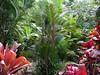 Regenwald Khao Lak Thailand (Shadarka) Tags: regenwald palme palmen rainforest palmtree khaolak thailand tropen tropical