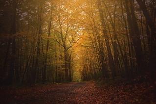 Autumn Divine