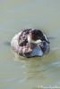 Svasso Piccolo (Castello foto) Tags: svasso piccolo mare occhio pesca acquatico