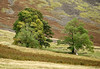 'Les arbres écossais' (Canadapt) Tags: trees moor highlands scotland canadapt