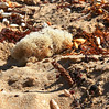 debris (tom.edwards1974) Tags: sand beach sponge seaweed landscape seascape color colour melbourne victoria australia sun