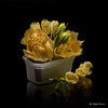 Only yellow flowers (Magda Banach) Tags: canon canon80d freesia sigma150mmf28apomacrodghsm blackbackground bouquet buds colors flora flower flowers macro nature plants porcelain reflection tulip tulips yellow