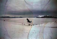 (Malykhanov) Tags: crow nature mountains mist mountain trip travel sky snow film fog filmphoto landscape analog atmosphere 35mm film35mm crimea winter
