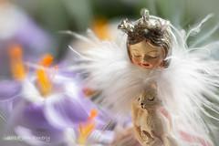 Fairy Gifts (Jamarem) Tags: fairy gift cat kitten christmas tree ornament decoration crocus flower floral macromondays tale onceuponatime