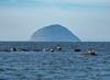 Ailsa Craig (Rourkeor) Tags: lendalfoot scotland unitedkingdom gb ailsacraig seals rocks sea water basking granite olympus omd em1mk2 12100mmpro mft
