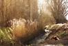 """""""Colors are the smiles of nature."""" — Leigh Hunt (genevieve van doren) Tags: bergelen flanders westvlaanderen nature"""