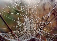Spider webs (Thanathip Moolvong) Tags: web spider mist fog morning dew winter droplet macro bokeh yashica film scan analog old classic notdigital analogue predigital manual fx3