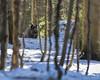 Wild Boar (EysManCzech) Tags: wildlife boar prase divoké nature woods forest snow pig nikond750 d750 nikkor200500 200500 ntg
