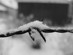 barbed eighteen (larsniel) Tags: barbed wire barbedwire snow winter crystals frost frosty series