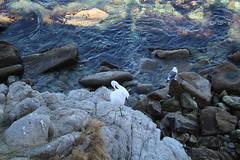 IMG_7663 (mudsharkalex) Tags: california pacificgrove pacificgroveca