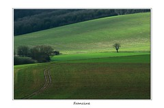 IMGP8366 copie (Francinen89) Tags: green vert arbre tree chemin campagne fields champs soleil sun ombre shadow