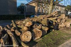 bomenkap (Marjon van der Vegt) Tags: denhaag voorjaar oud ijs