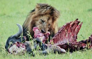 Buffalo Kill - A Once In A Lifetime Experience