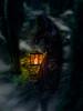 come with the death (alexiscrozier1) Tags: compositing sombre dark darkness ténèbres obscur thriller miseenscène création art movies film couleur color lanterne flamme fire feu brume seigneurdesanneaux