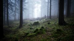 Dans la brume (LoupiDoop) Tags: forest trees fog switzerland
