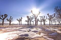 Falkensteiner-Ufer (MiBro) Tags: 8gradc falkenstein elbe schnee snow strand beach winter mood sonne sun white weis sand platanen plane trees