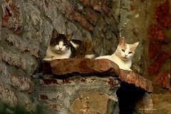 Happy Caturday! (Monica Muzzioli) Tags: cat cats animal pet blotched brick bricks wall bench