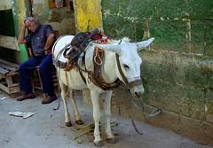 Man sleeping next to a donkey - Cairo - Egypt. Free Stock Photo