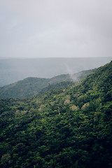 Black River Gorges National Park  - Mauritus - October 2017 (maudlecozannet) Tags: africa beauty nature canyon color image day environment falling water high angle view majestic mauritius scene move outdoors plant rift valley scenics tranquil travel destination tree vacations vertical viewpoint waterfall brume forêt paysage arbre ciel sky landscape green jungle ilemaurice chamarel blackriver nationalpark photography photooftheday aventure animal canon5d canon canonphotography canonartist canon50mm magiclight maurice canon50mn canonpahotography canonartists zoom detail republicofmauritius myfeatureshoot documentary documentaire outdoor exterieur