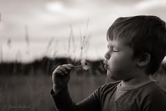 Make a Wish (JG_photo) Tags: portrait wish dandelion summer evening breath