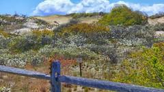 (mahler9) Tags: fence herringcove capecod may jaym 2014 dune