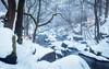 Winter's tale (J C Mills Photography) Tags: peak districtpadley sessile oakrocksriverbrook bentley derbyshire padley gorge snow mist landscape