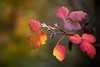 Autumn Sweater (Thomas Hawk) Tags: america forestpark missouri mo stlouis usa unitedstates unitedstatesofamerica tree trees fav10 fav25